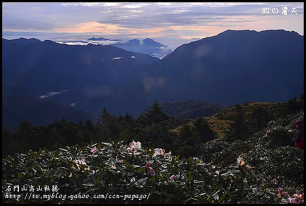石門山高山杜鵑_DSC2169