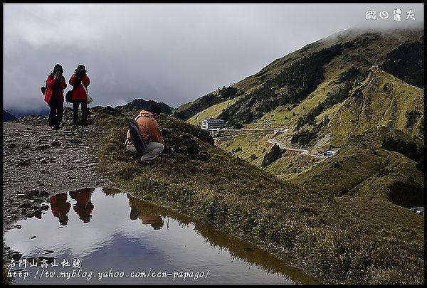 石門山高山杜鵑_DSC2401