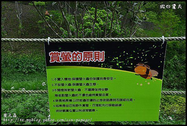 螢火蟲_DSC0516
