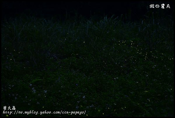 螢火蟲_DSC0543
