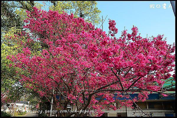 花卉試驗中心DSC_1882