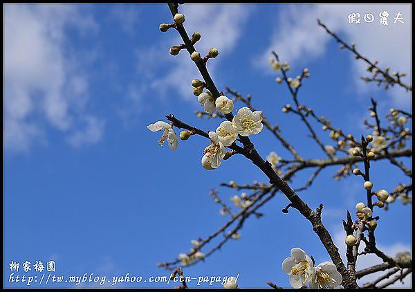 柳家梅園DSC_7640
