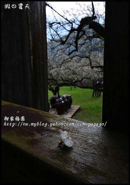 柳家梅園DSC_7659