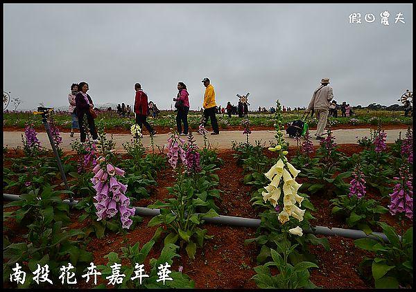南投花卉嘉年華DSC_6379