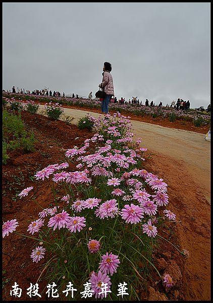 南投花卉嘉年華DSC_6376