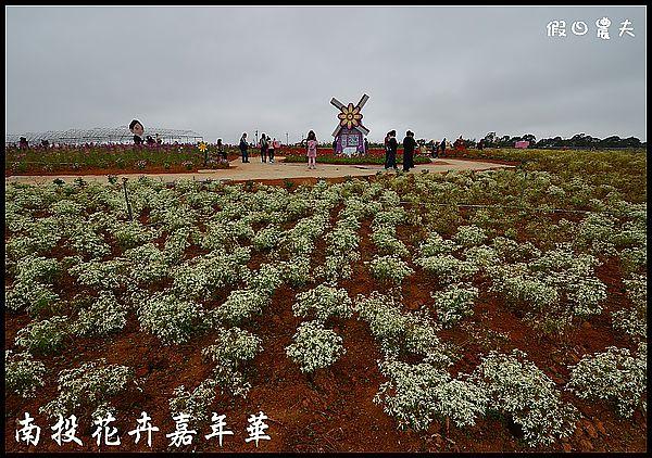 南投花卉嘉年華DSC_6382