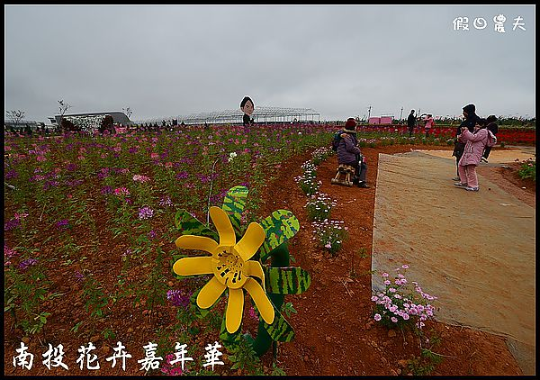 南投花卉嘉年華DSC_6384