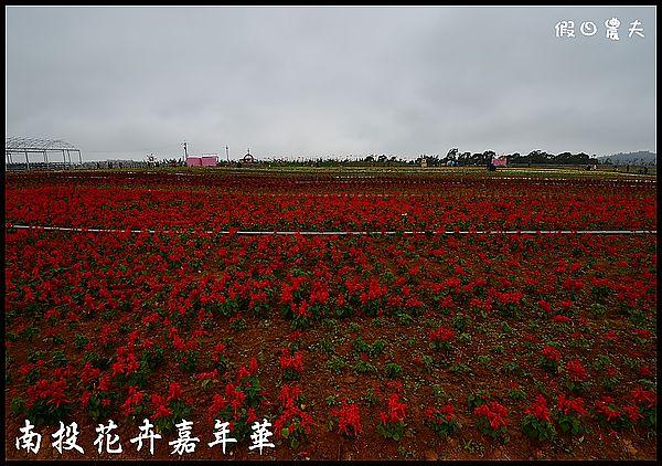 南投花卉嘉年華DSC_6385