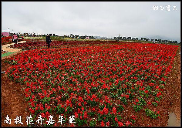 南投花卉嘉年華DSC_6388
