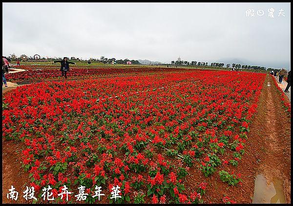 南投花卉嘉年華DSC_6389