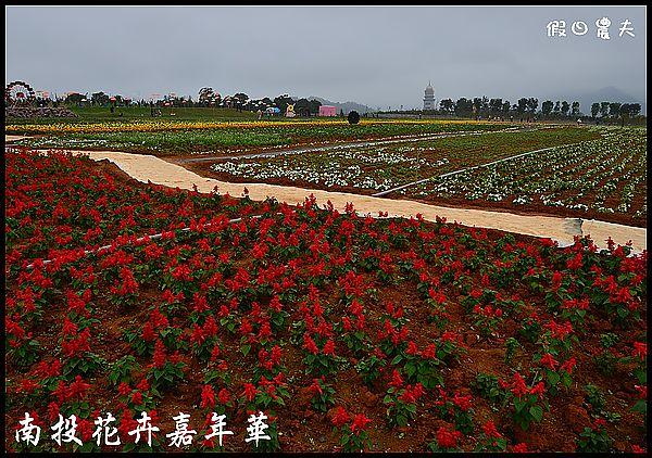 南投花卉嘉年華DSC_6411
