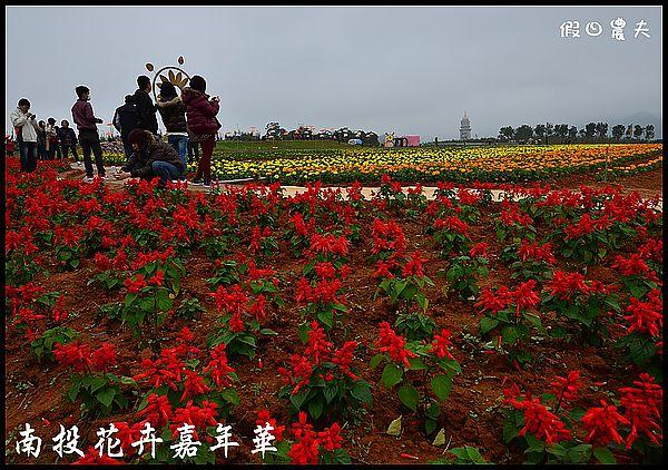 南投花卉嘉年華DSC_6413