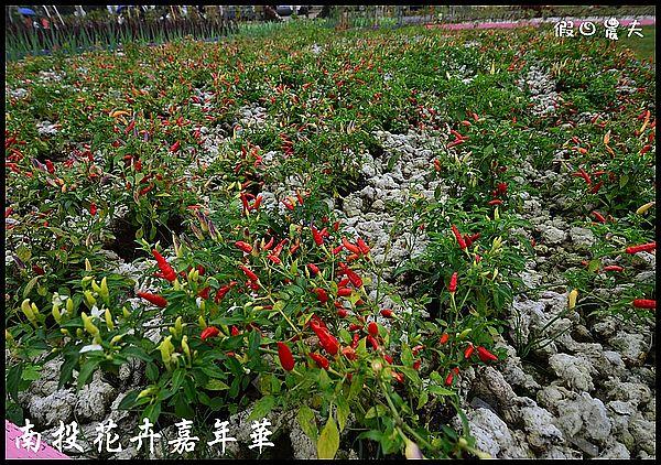 南投花卉嘉年華DSC_6426