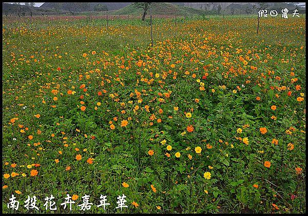 南投花卉嘉年華DSC_6443