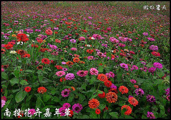 南投花卉嘉年華DSC_6446