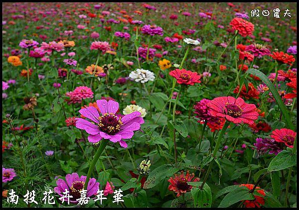 南投花卉嘉年華DSC_6448