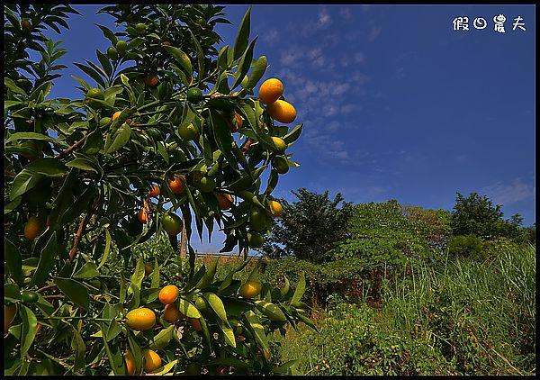 老農DSC_9736