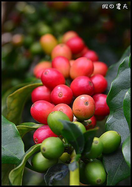 谷泉咖啡DSC_6254
