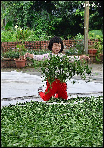 崧富製茶廠DSC_6765