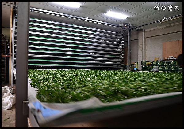 崧富製茶廠DSC_6781