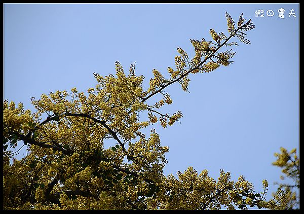 溪州公園DSC_2478