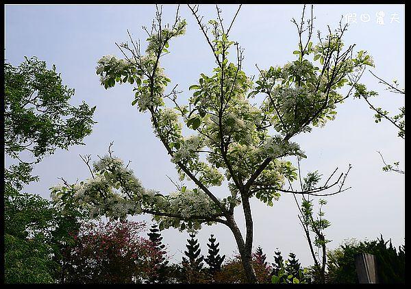 溪州公園DSC_2433
