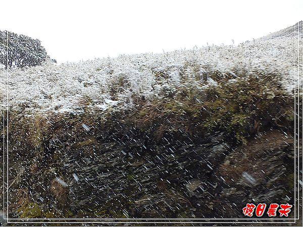 合歡山下雪了DSCF9396