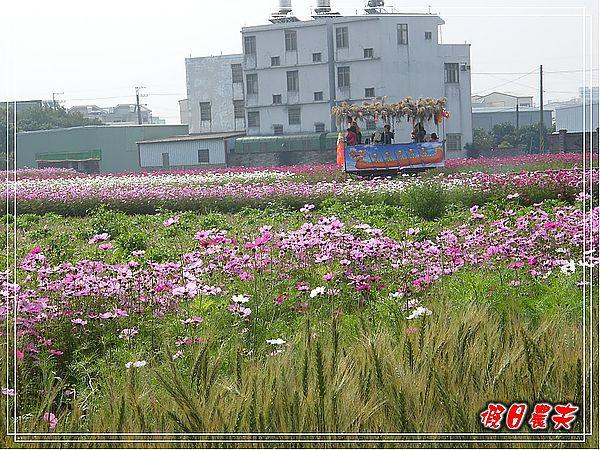 大雅小麥-寶興宮DSCF2606