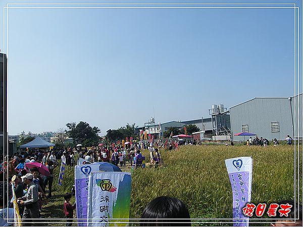大雅小麥-趙家窯DSCF2676