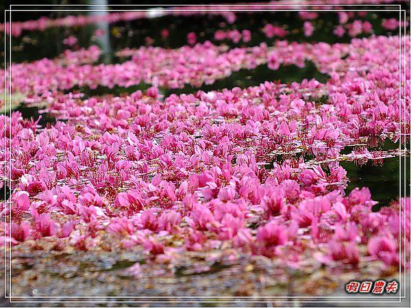 草坪頭DSCF7670.jpg