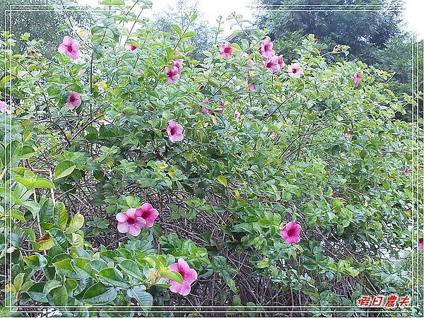 寶來溫泉山莊DSCF1576.jpg