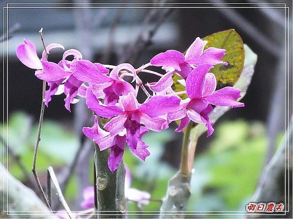 寶來溫泉山莊DSCF1574.jpg