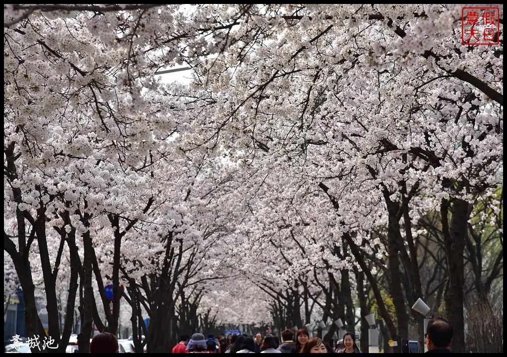 韓國大邱親子賞櫻自由行|壽城池遊樂園.搭地鐵去賞櫻