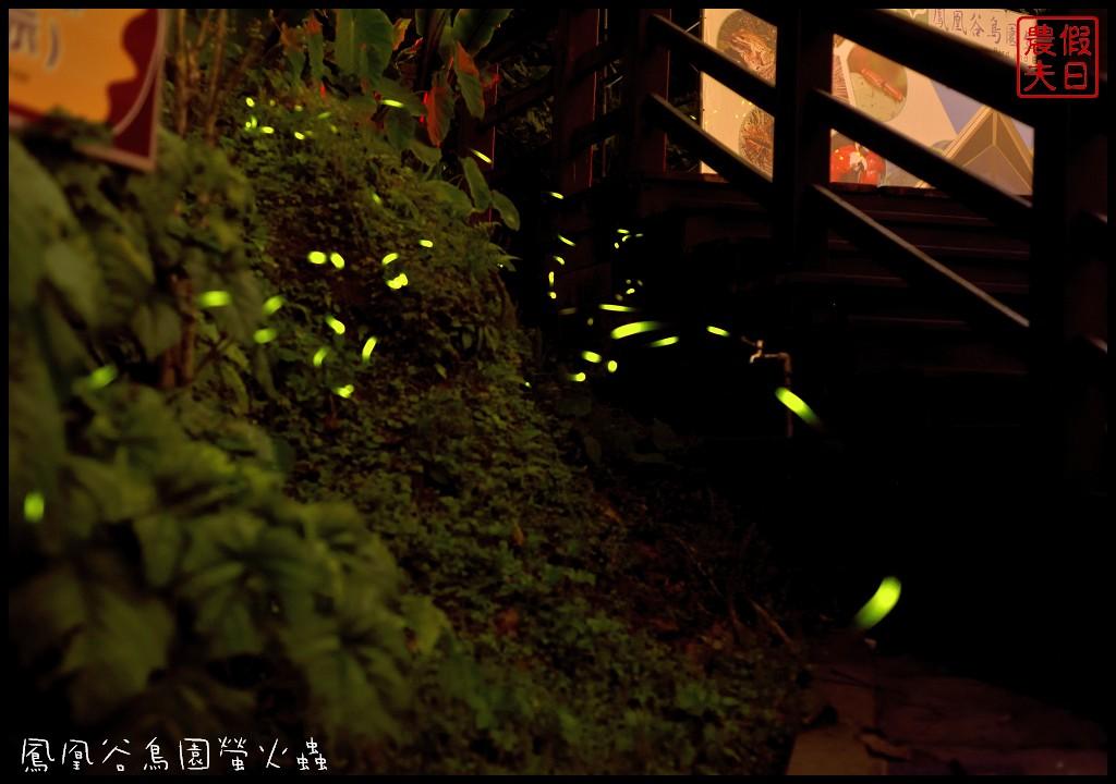 鳳凰谷鳥園螢火蟲